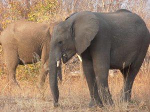 charles-zambia-aug-2013-027
